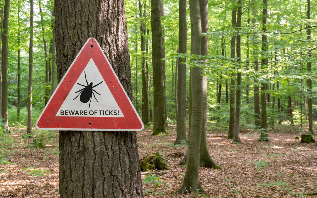 "Combatting Lyme disease myths and the ""chronic Lyme industry"""