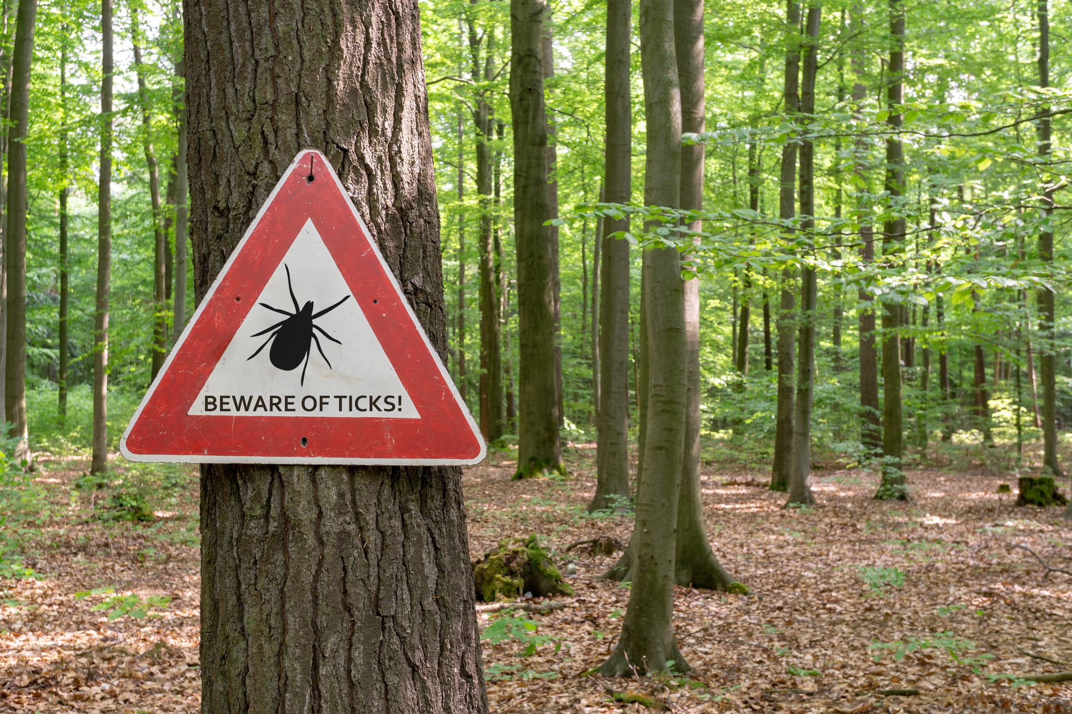 """Sign on a tree saying """"Beware of ticks."""" Forest in the background."""